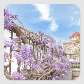 Blooming blue Wisteria sinensis on fence in Greece Square Sticker