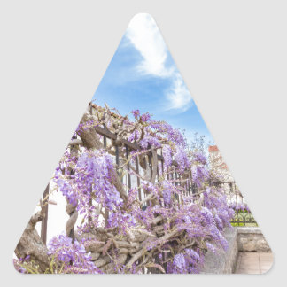 Blooming blue Wisteria sinensis on fence in Greece Triangle Sticker