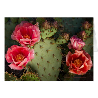Blooming Cactus Personalized Greeting Card