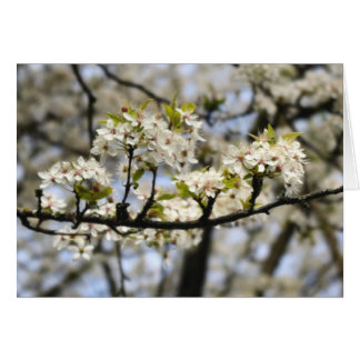 Blooming Dogwood Tree Card