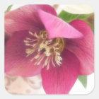 Blooming Hellebore Flower Square Sticker