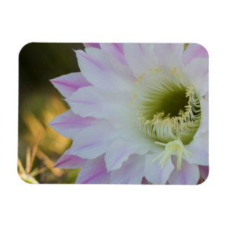 Blooming in purple and white rectangular photo magnet