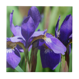 Blooming Iris Tile