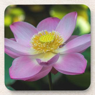 Blooming lotus flower, Indonesia Drink Coaster