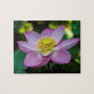 Blooming lotus flower, Indonesia Jigsaw Puzzle