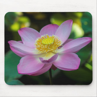 Blooming lotus flower, Indonesia Mouse Pad