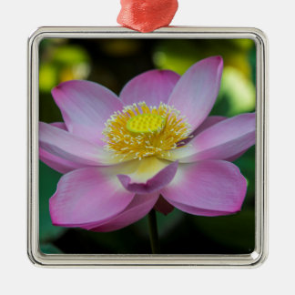 Blooming lotus flower, Indonesia Silver-Colored Square Ornament
