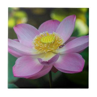Blooming lotus flower, Indonesia Tile