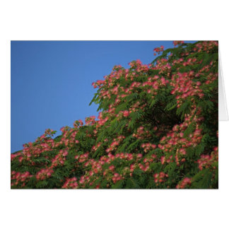 Blooming Mimosa Tree notecard
