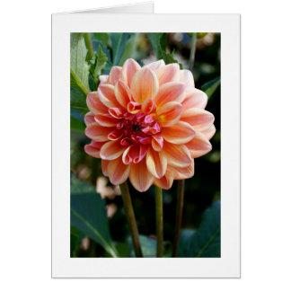 Blooming Peach Dahlia Fine Art Photography Card