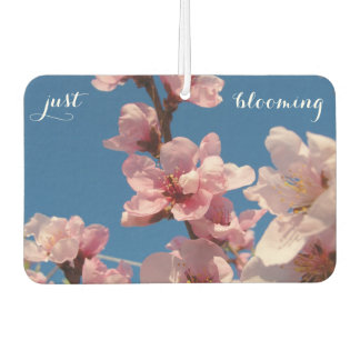 Blooming peach tree pink blooms in springtime air freshener