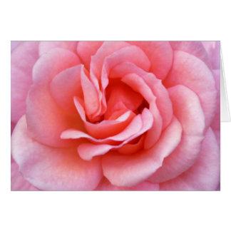 Blooming Pink Rose Notecard