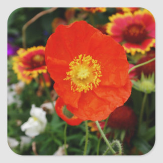 Blooming Poppy Square Sticker