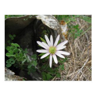 blooming postcard