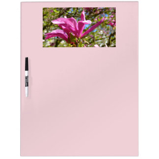 Blooming Purple Magnolia 03.3 (Tulpenbaum) Dry Erase Board