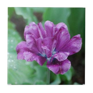 Blooming Purple Parrot Tulip Tile