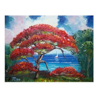 Blooming Royal Poinciana Tree and Sailboat Postcard