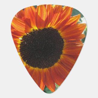 Blooming Sunflower Guitar Pick