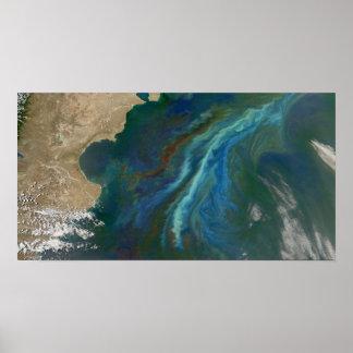 Blooms in Ocean by Patagonia Poster