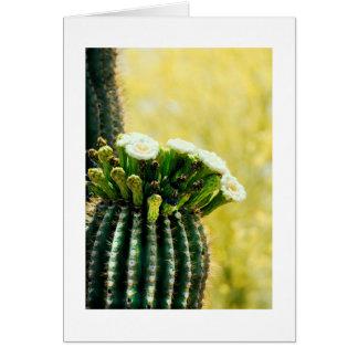 blooms of a Saguaro Card