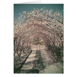 Blossom arch in Canberra -Retro Greeting Card