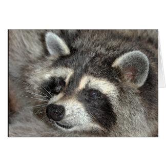 Blossom, Raccoon Matriarch at WBY. Card