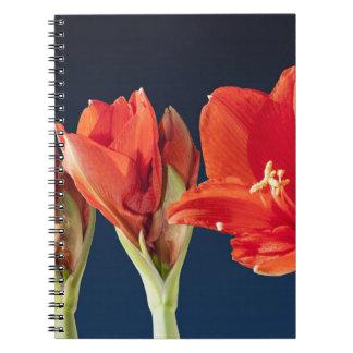 Blossoming Amaryllis Flower Spiral Notebook