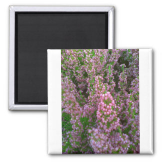 Blossoming Moorland Square Magnet