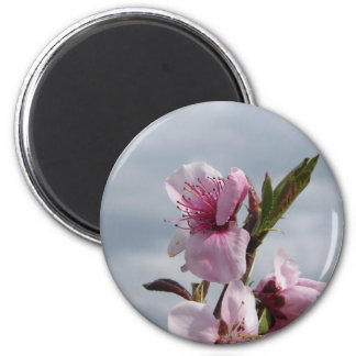 Blossoming peach tree against the cloudy sky 2 inch round magnet