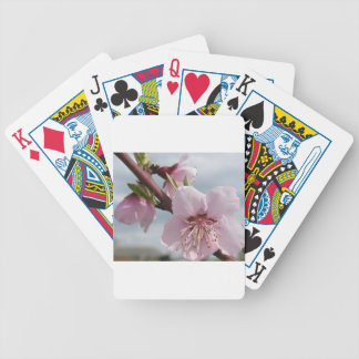 Blossoming peach tree against the cloudy sky bicycle playing cards