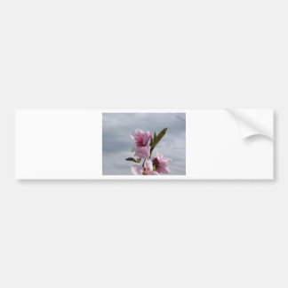 Blossoming peach tree against the cloudy sky bumper sticker