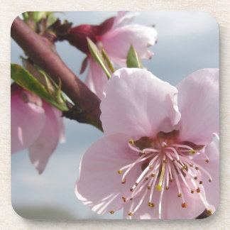 Blossoming peach tree against the cloudy sky coaster