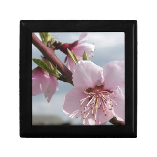 Blossoming peach tree against the cloudy sky gift box