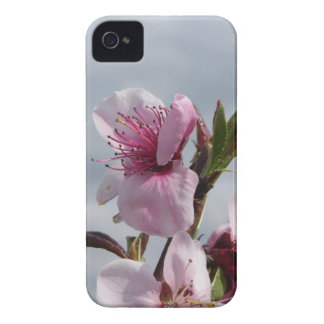 Blossoming peach tree against the cloudy sky iPhone 4 covers