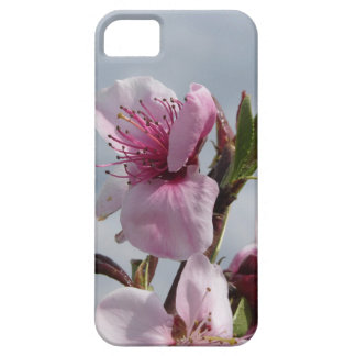 Blossoming peach tree against the cloudy sky iPhone 5 cover