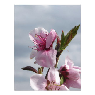 Blossoming peach tree against the cloudy sky letterhead