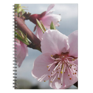 Blossoming peach tree against the cloudy sky notebooks