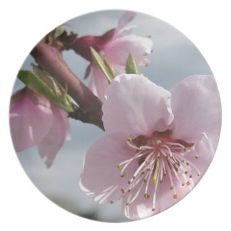 Blossoming peach tree against the cloudy sky plate