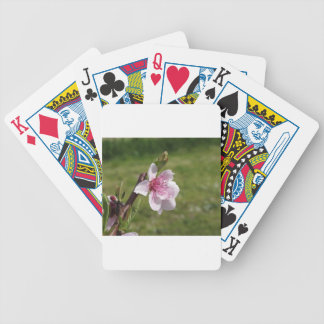 Blossoming peach tree against the green garden bicycle playing cards