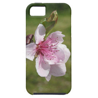 Blossoming peach tree against the green garden case for the iPhone 5