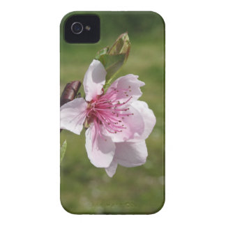 Blossoming peach tree against the green garden iPhone 4 cover