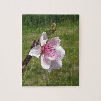 Blossoming peach tree against the green garden jigsaw puzzle