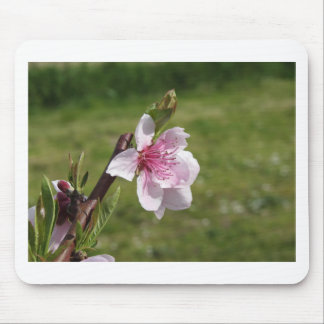 Blossoming peach tree against the green garden mouse pad