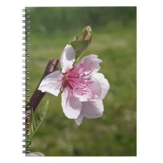 Blossoming peach tree against the green garden notebooks