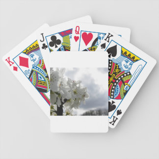 Blossoming pear tree against the cloudy sky bicycle playing cards