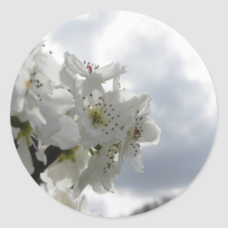 Blossoming pear tree against the cloudy sky classic round sticker