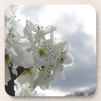 Blossoming pear tree against the cloudy sky coaster
