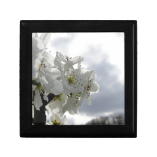 Blossoming pear tree against the cloudy sky gift box