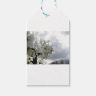 Blossoming pear tree against the cloudy sky gift tags