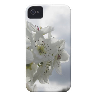 Blossoming pear tree against the cloudy sky iPhone 4 cases